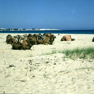Tunesien-Tunesien-Hammamet-1990
