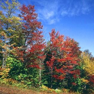 vermont-beginnende Foliage