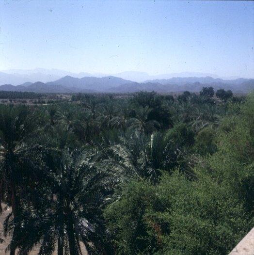 oman-oasen-palmenwald 1989