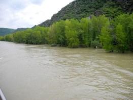 rhein-hochwasser-ufer