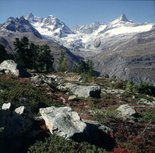 zermatt-wald-herbst-3