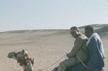 Gizeh-Sakkara-kamelritt nach Gizeh 1978