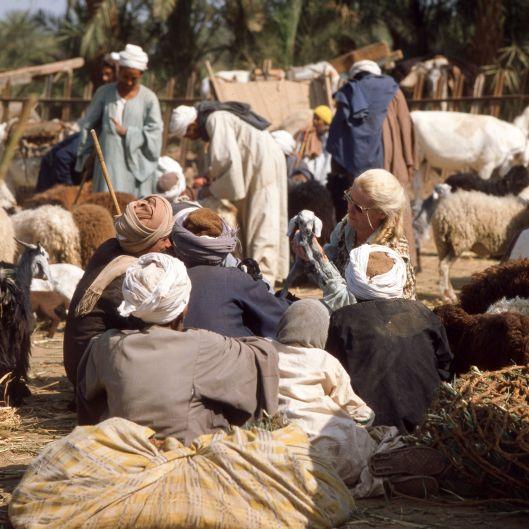 Ägypten Viehmarkt