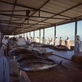 Oman Sohar Fischhalle 1989