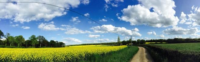 champ-jaune-july-buxy