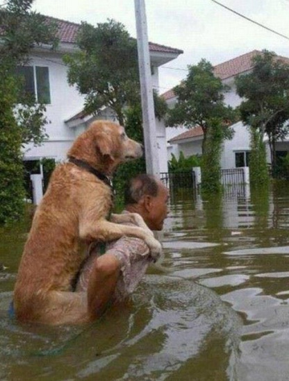 災害救助される犬w