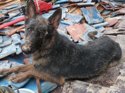 陸上自衛隊救助犬