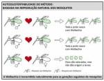 蚊を放出?! ブラジルでデング熱撲滅プロジェクトがスタート