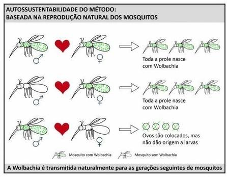 ボルバキア蚊