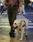 週刊現代が報じた「盲導犬オスカーは刺されていなかった」