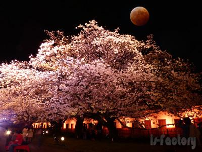 皆既月食と夜桜のコラボ