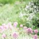 Park Ji Yoon - Flower