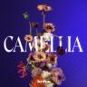 Camellia - EP