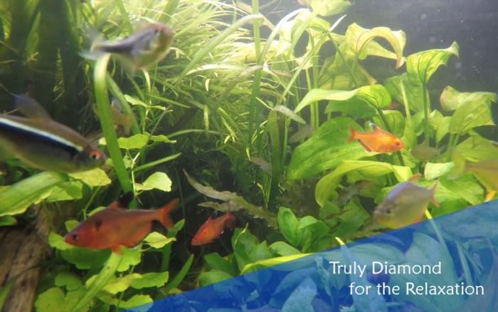 4_Chill_Relax_Aquarium_Cay_Fish_Tank_HD_Video.jpg