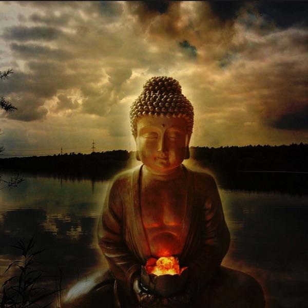 Buddhalife Pro