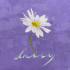 Daisy - PENTAGON