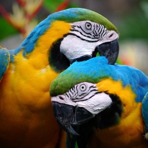 Parrot*