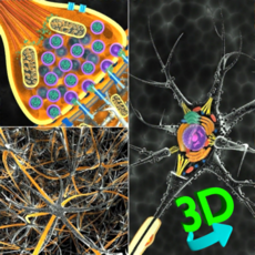 3D Biology +