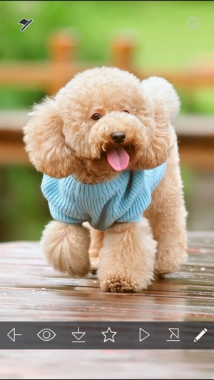 Cute Puppy Wallpapers   Little Dog s Paws Images on the App Store  Cute Puppy Wallpapers   Little Dog s Paws Images on the App Store