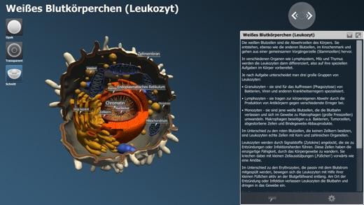bodyxq cell library Screenshot