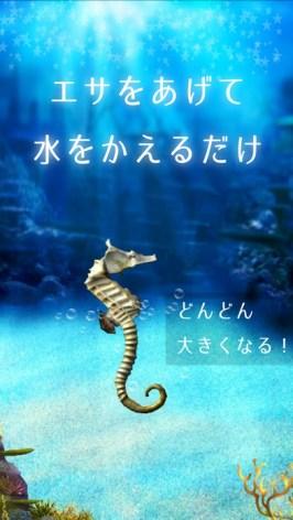 アートアクリウム!タツノオトシゴ育成ゲーム紹介画像2
