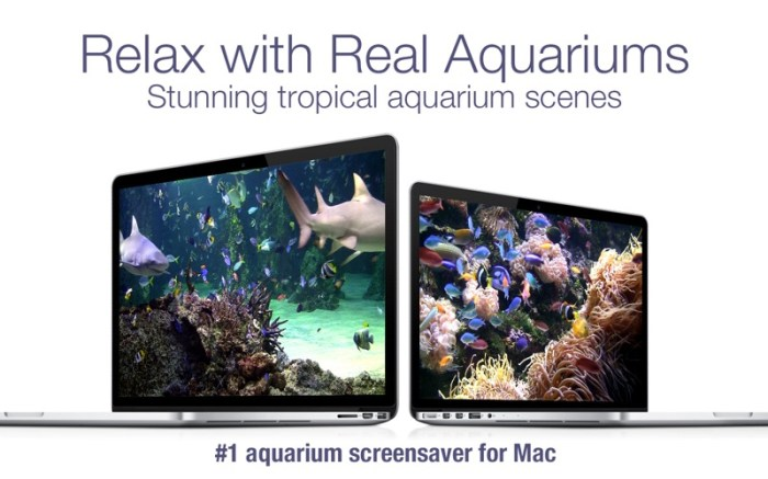 Aquarium Live HD+ Screensaver Screenshot 03 9wg6z1n