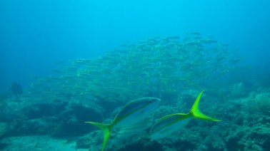 Easy to see lots of fish diving off the coast of Nassau.