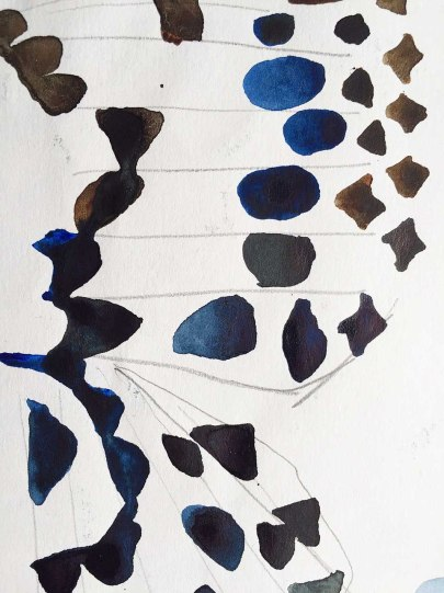 Drawing from image of butterfly: pencil and watercolour