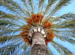 Dessiner dans votre carnet de voyage les beautés de l'une des plus grande palmeraies du Maroc.