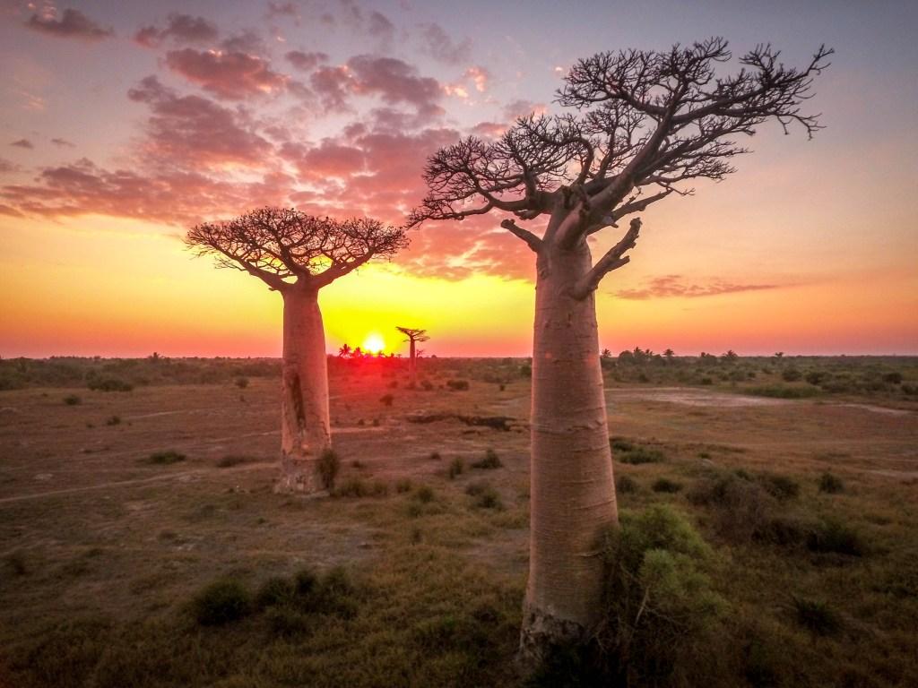 baobab madagascar morondave