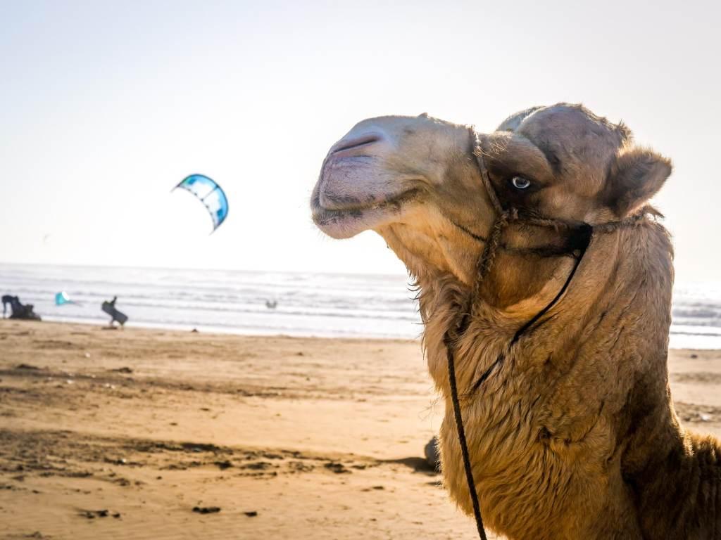 Kitesurf Maroc apprendre débuter
