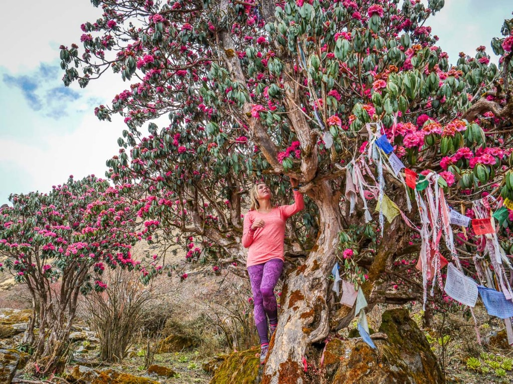 Nepal Annapurna Rhododendron Trek