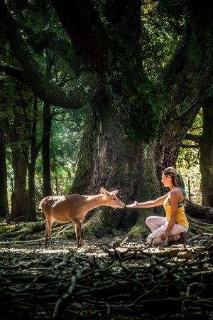 Nara cerf japon
