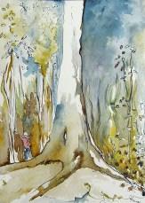 taman negara le grand arbre