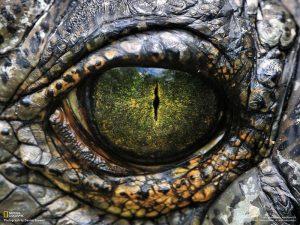 Il faut regarder le dragon dans les yeux