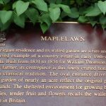 description maplelawn