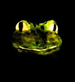 grenouille allumée dans le noir, papier de soie
