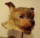 tête de chien dingo