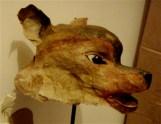 tête de dingo, profil