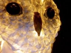 tête de chouette blanche , papier, éclairée