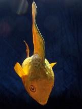 poisson citron, papier de soie