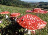 champignons en papier
