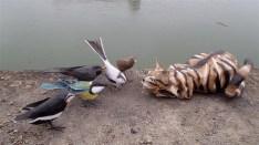 chat et oiseaux en face à face