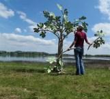 mise en place des branches