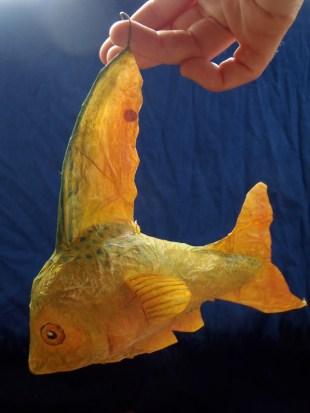 poisson citron papier de soie