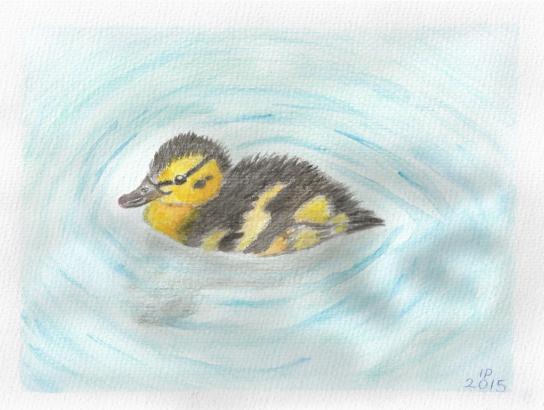 duckling Doodle