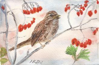 Songbird - Watercolour