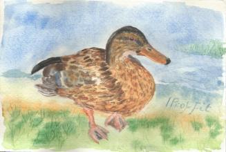Duck from Chesham - Watercolour