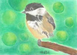 Chickadee - Coloured pencils