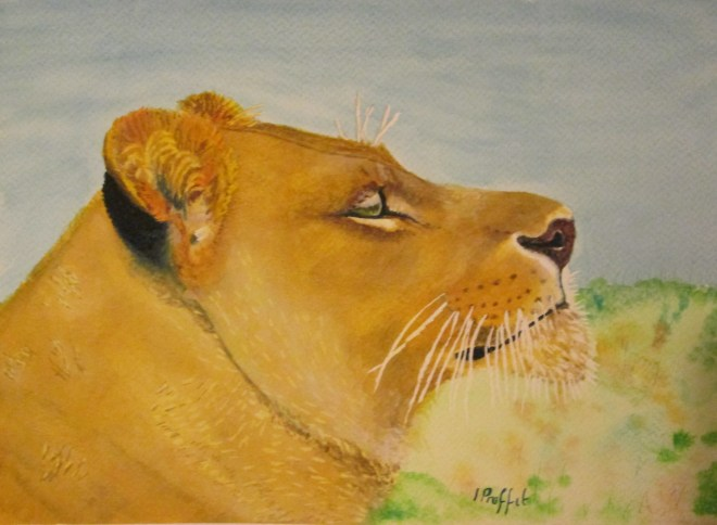 lioness finished cropped